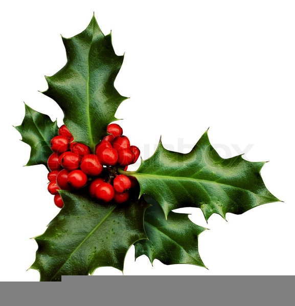 Christmas Holly Sprig Clipart.