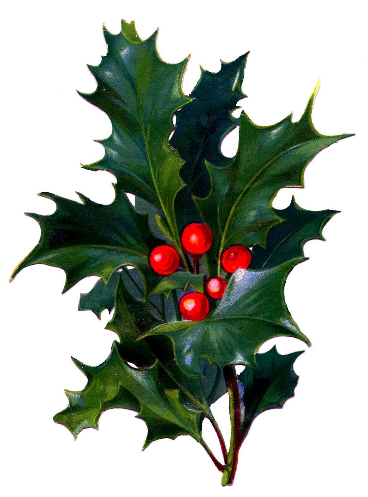 14 Christmas Holly Images!.