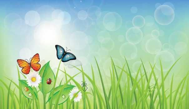 Green Spring Background With Grass & Butterflies.