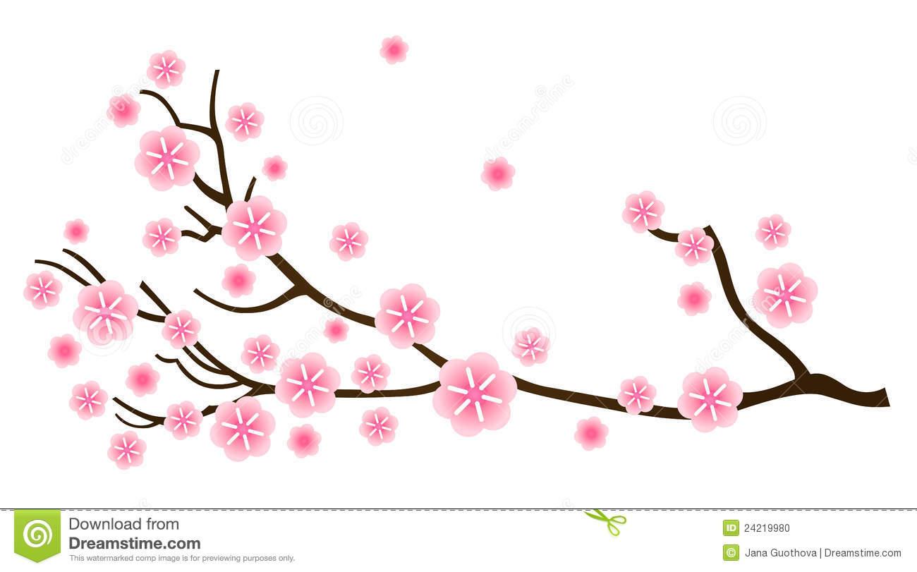 Sakura Cherry Blossom In Spring Stock Photo.