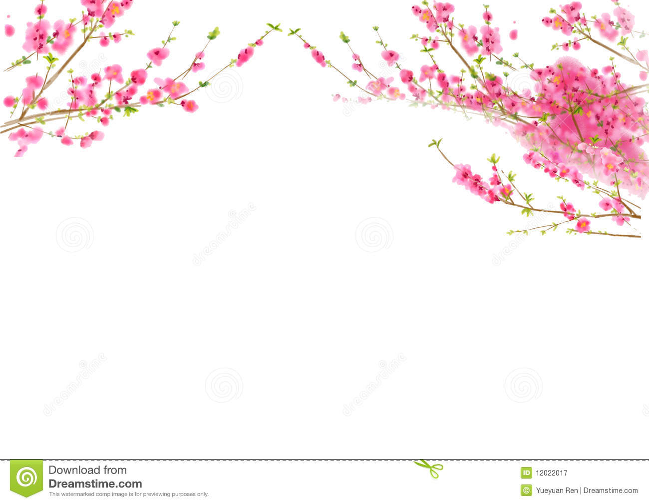 Cherry Blossom Time Stock Illustrations.