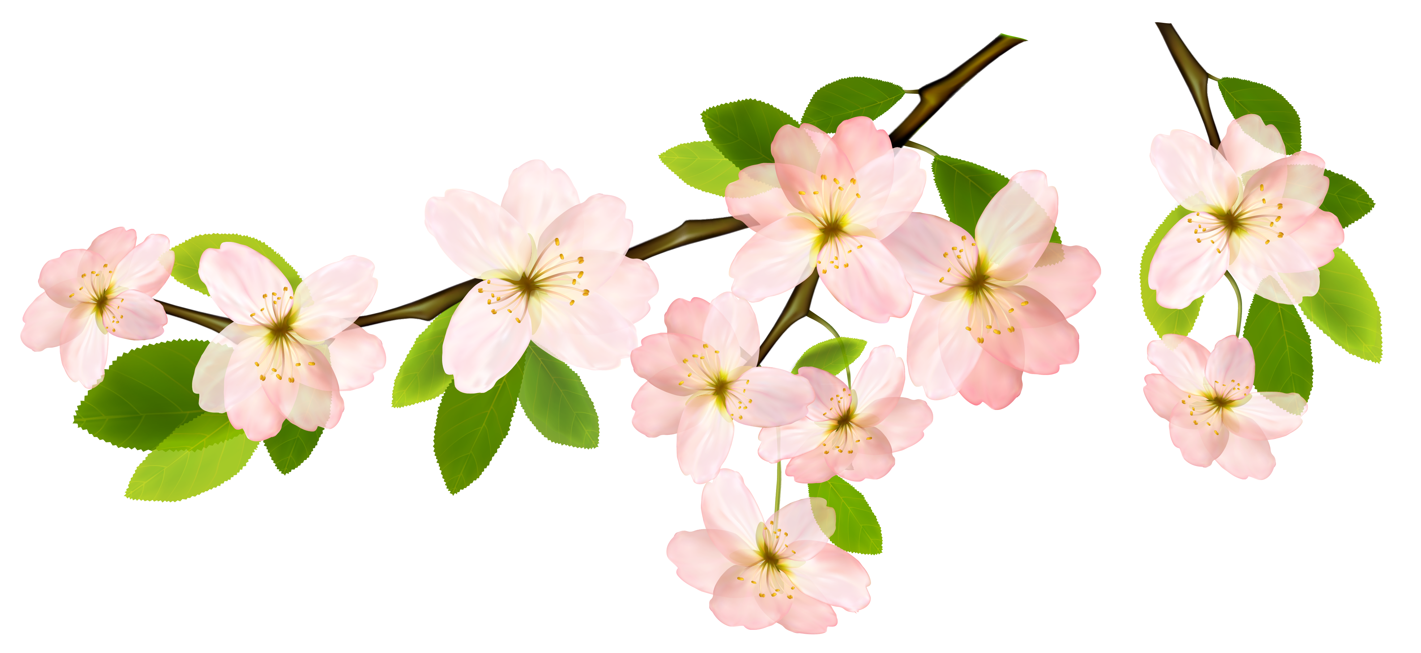 Spring Branch PNG Clipart Picture.