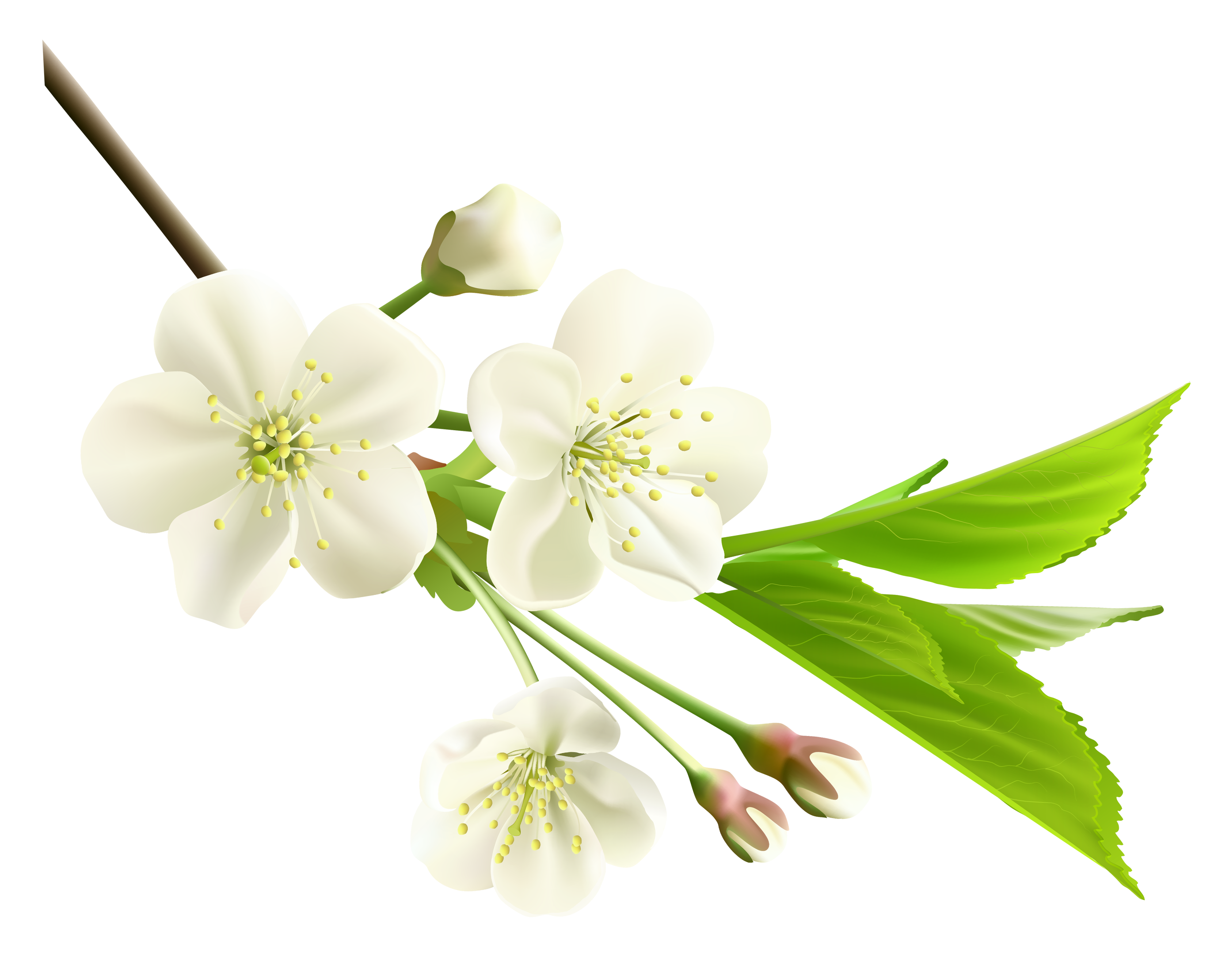 Spring branch clipart #10