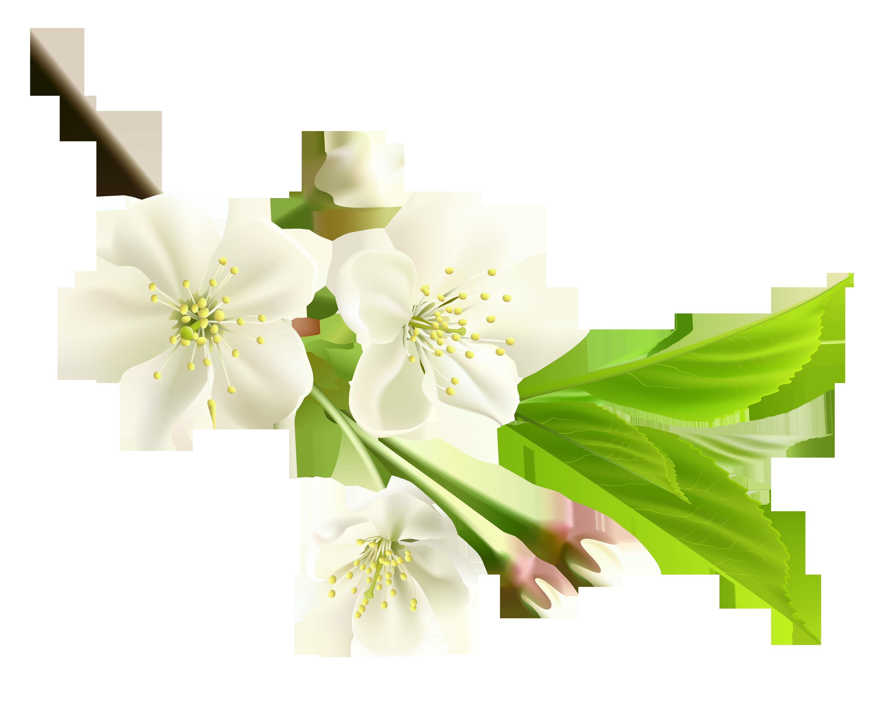 Spring branch clipart #11