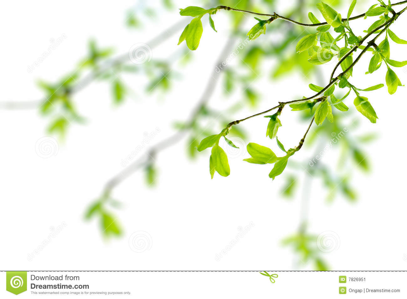 Spring branch clipart #15