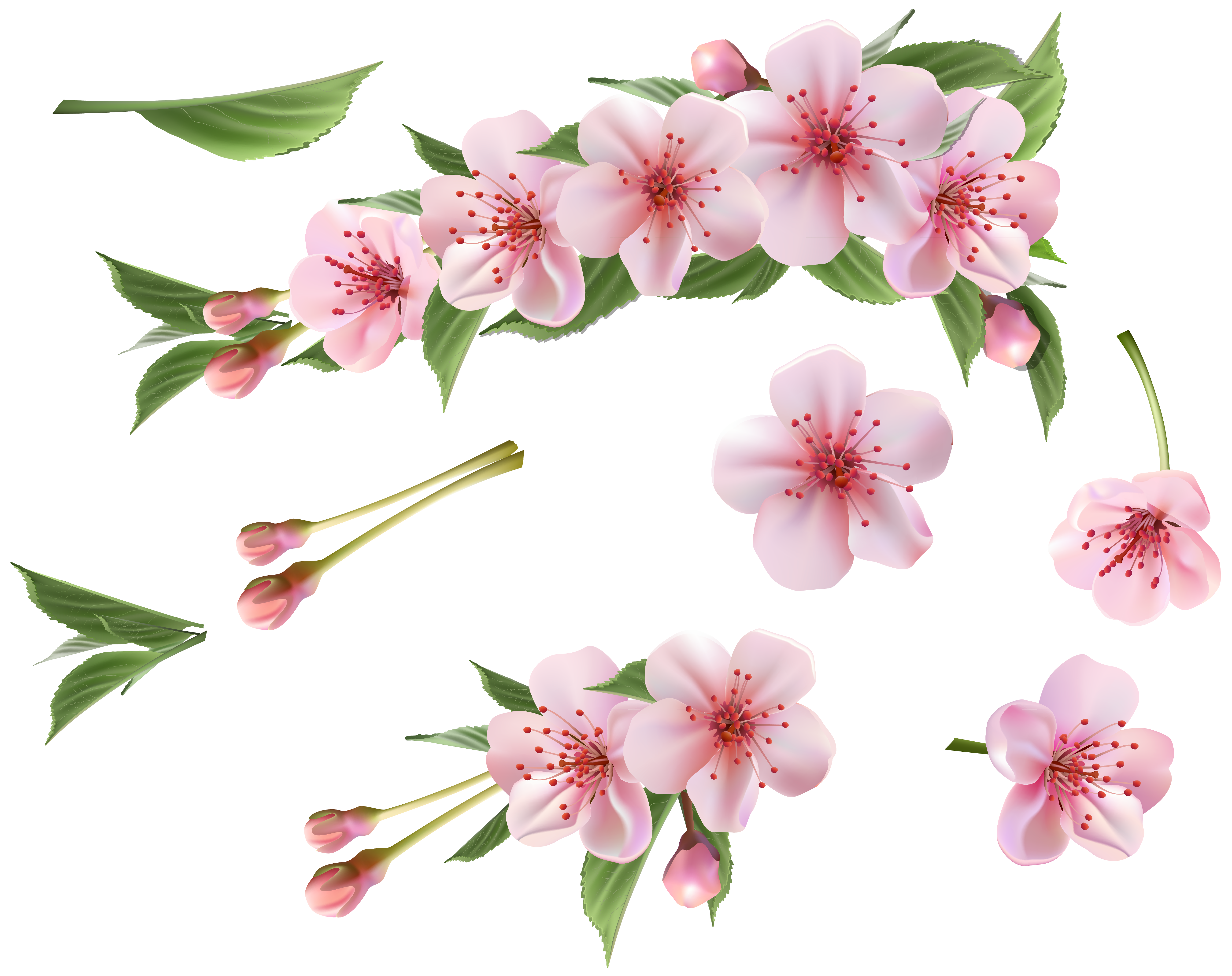 Spring branch clipart #6