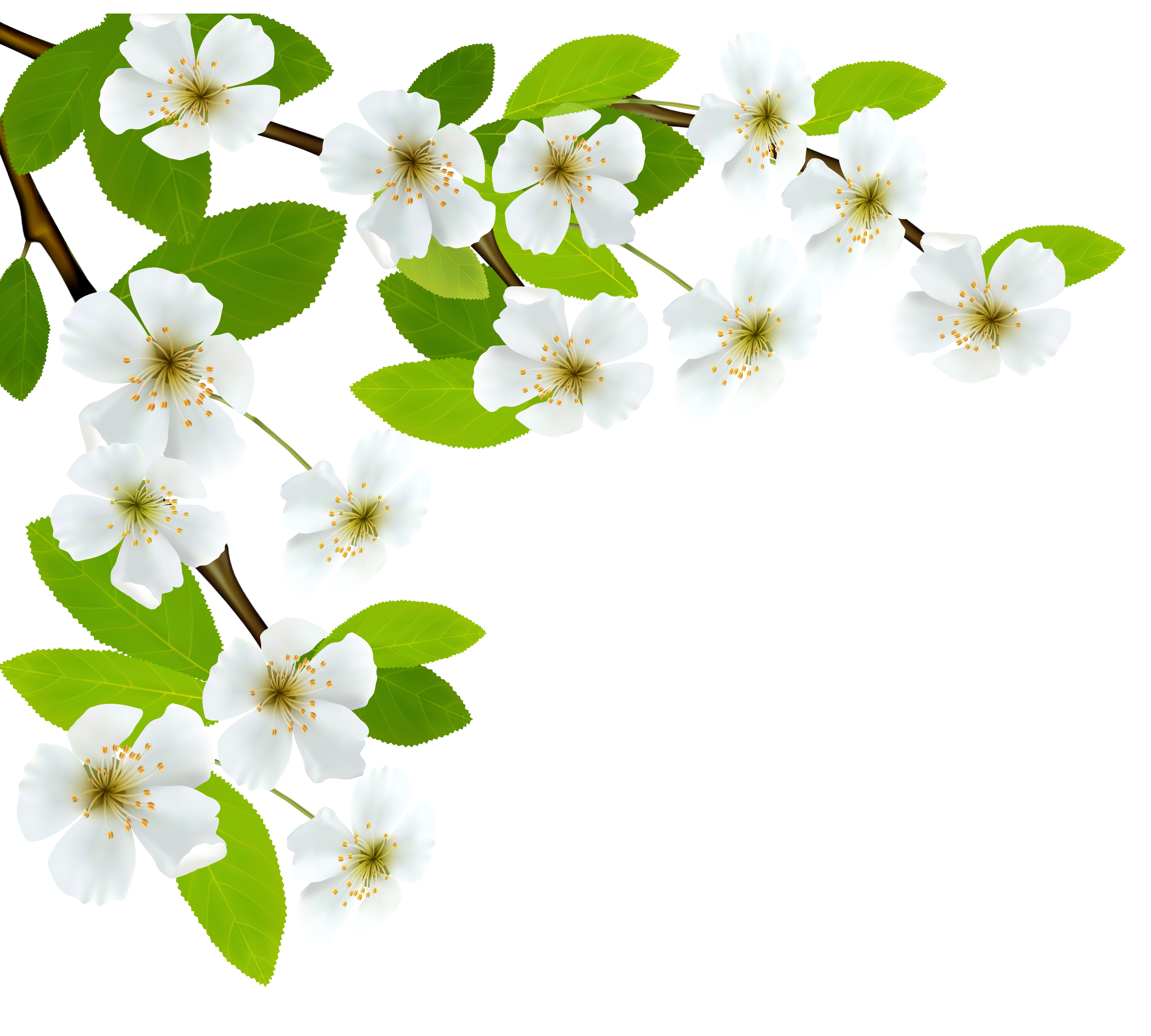 White Spring Branch PNG Clipart Image.