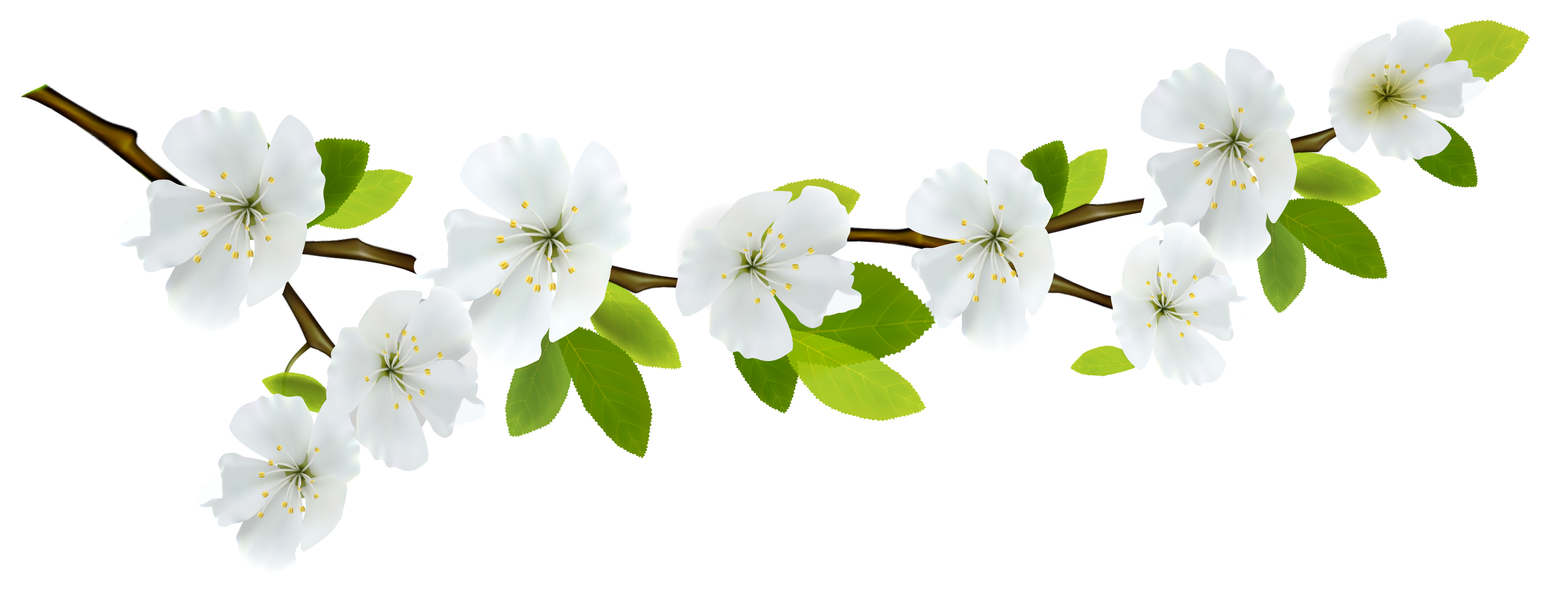 Spring Branch White PNG Clipart.