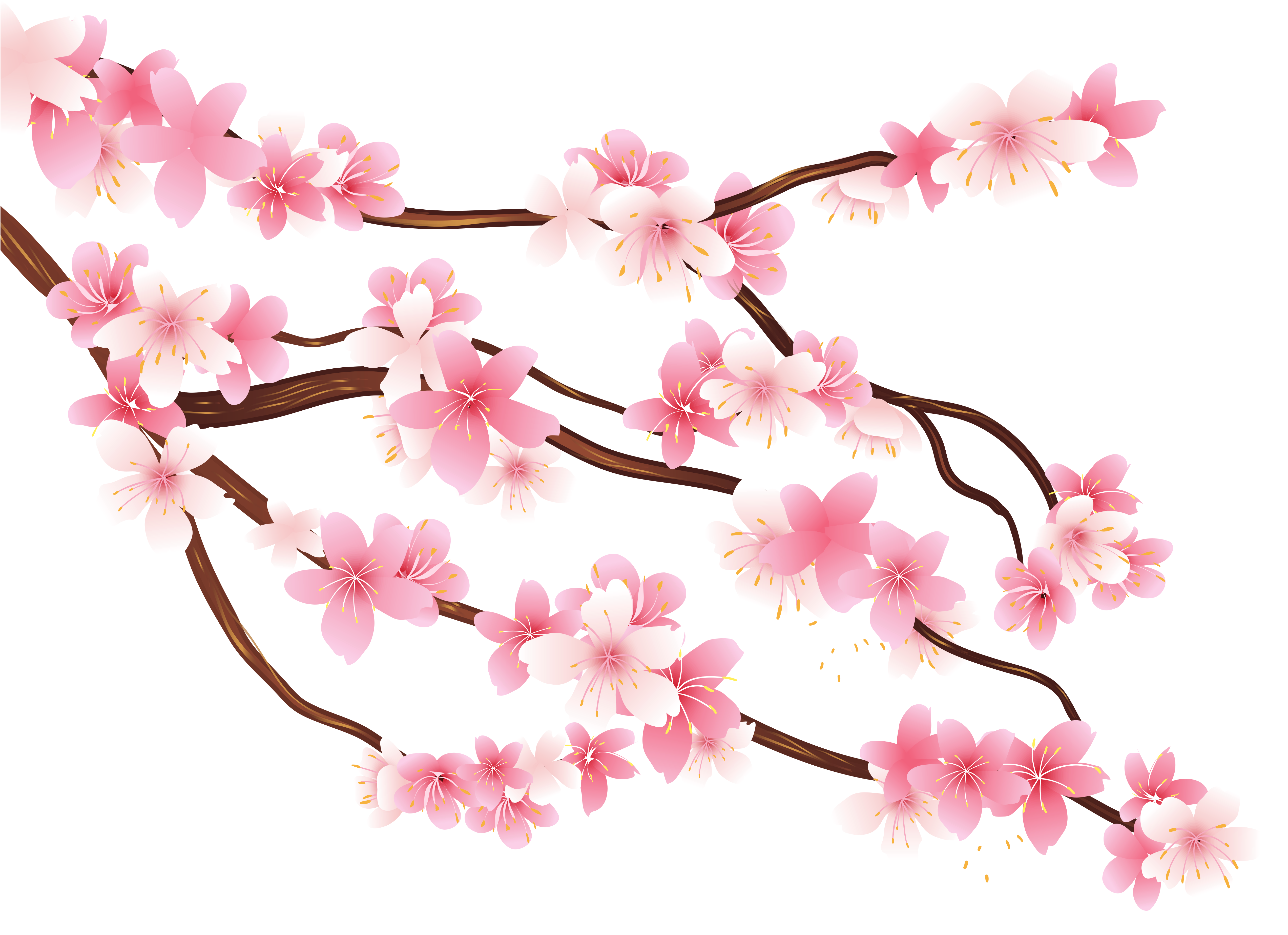 Spring branch clipart #2