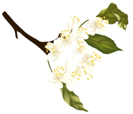 Spring branch clipart #18
