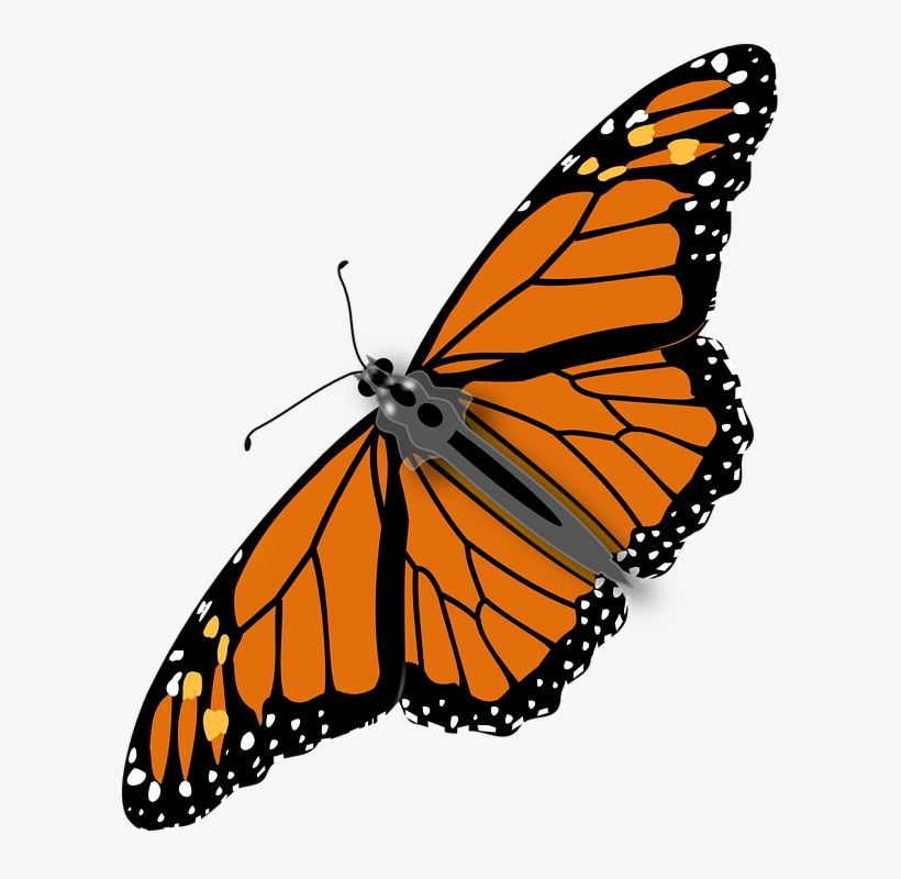 Download Free png Colorful Butterfly Clipart, Cute Graphics.