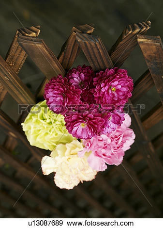 Stock Photograph of goods, spring, fancy, carnation, flower.