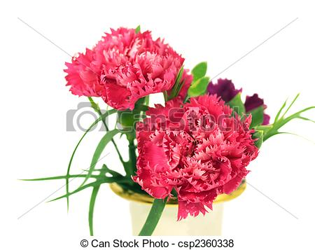 Pictures of spring carnation flowers springtime.