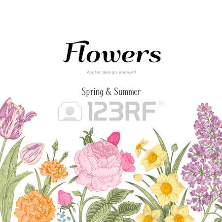 3,297 Carnation Stock Vector Illustration And Royalty Free.
