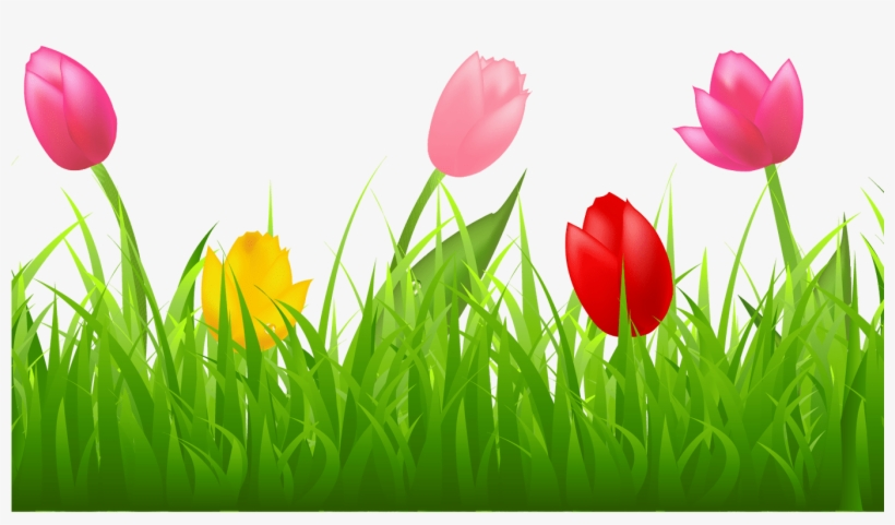 Grass With Colorful Tulips Png Clipart Spring Pinterest.