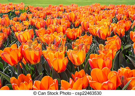 Stock Photos of Vibrant spring colours.