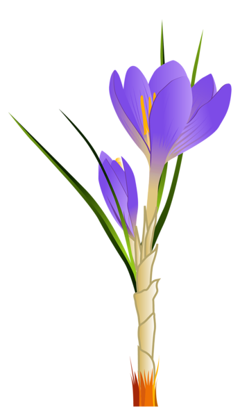 Spring Crocus PNG Clipart Picture.