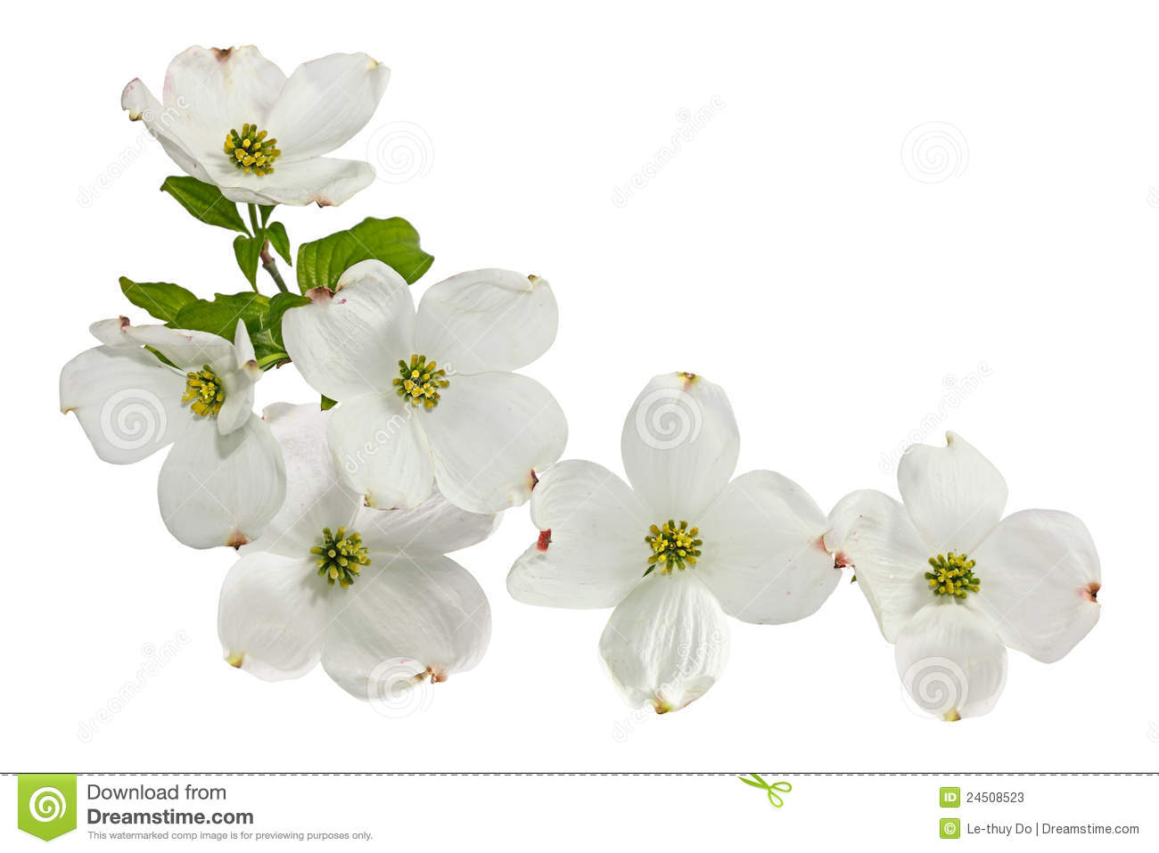 Dogwood Blossom Clipart.