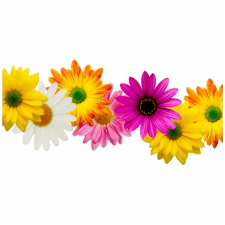 Spring Flowers Border PNG Images.
