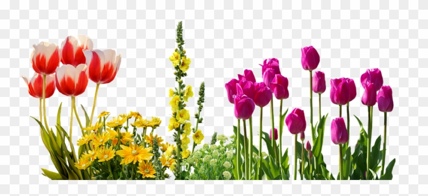 Transparent Spring Flowers Clipart (#3260468).
