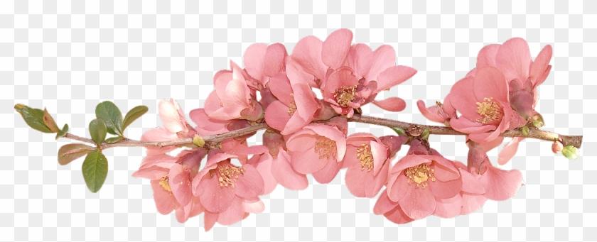 Spring Flowers Spring Flower Clip Art Clipart.