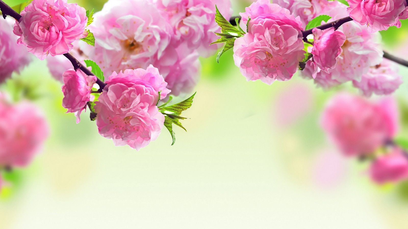 Spring Flowers Backgrounds Desktop.