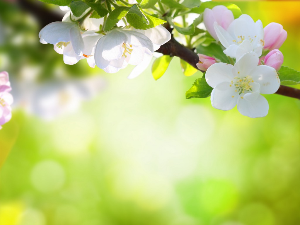 Spring Flowers Wallpapers HD Pictures.