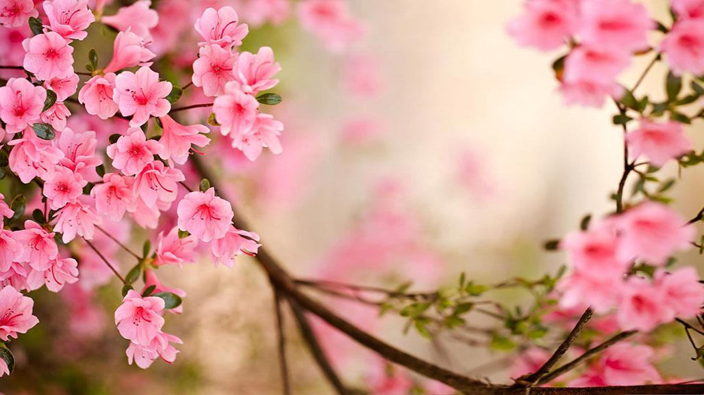 Spring Flowers Live Wallpaper.