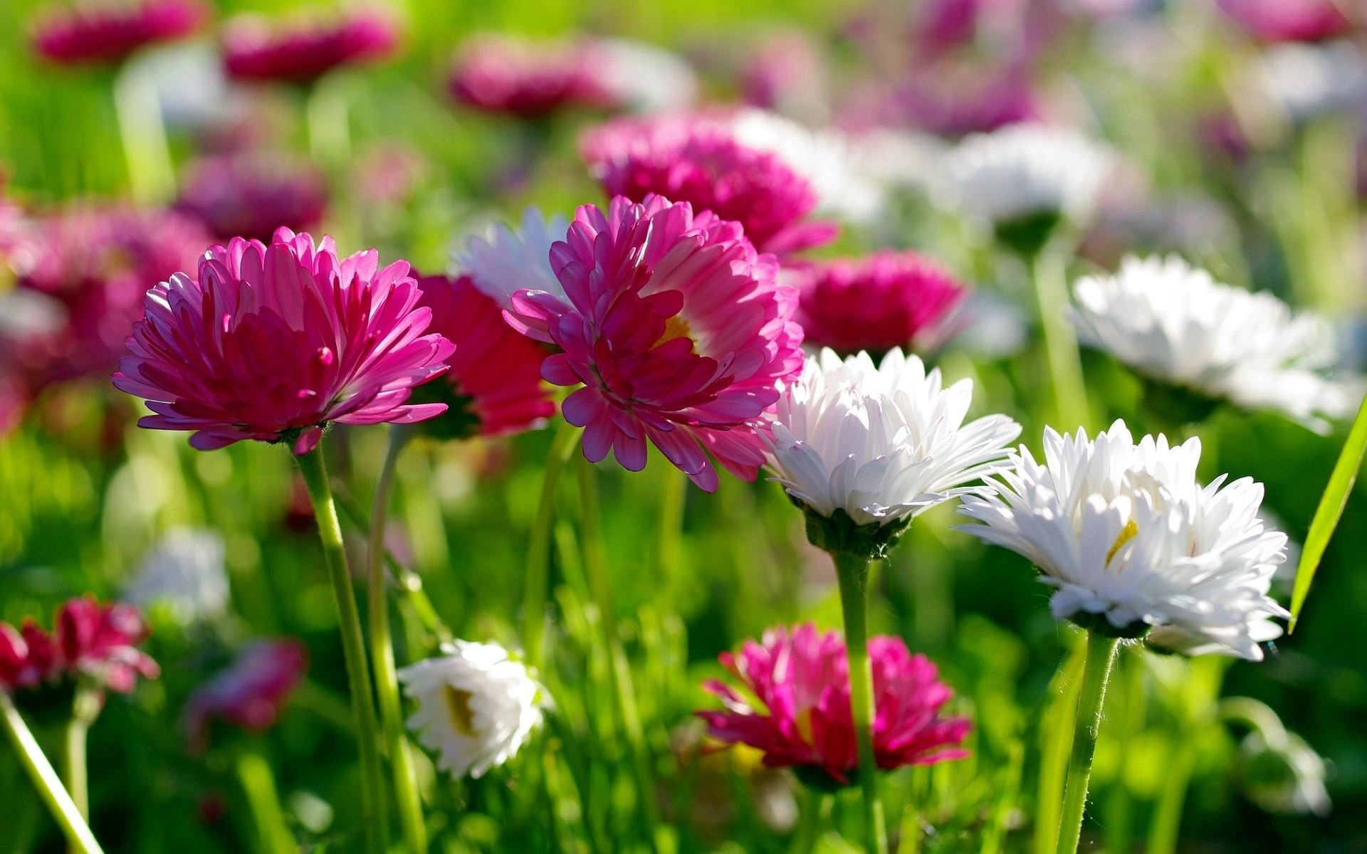spring flowers backgrounds #9