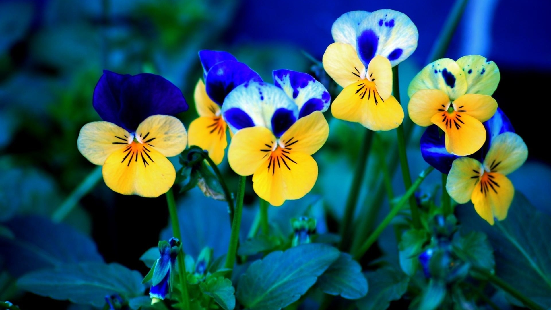 spring flowers backgrounds #6