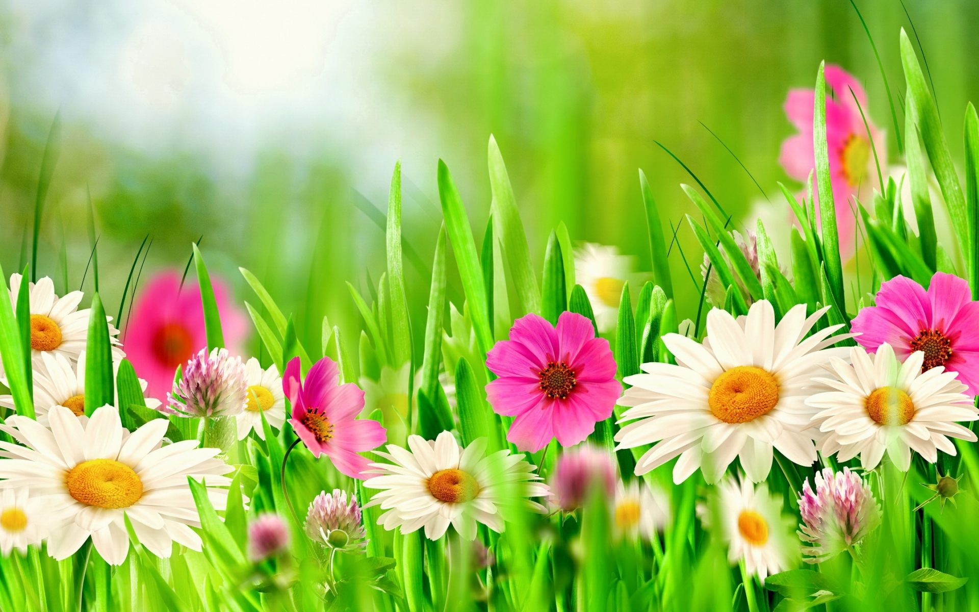 spring flowers backgrounds #3