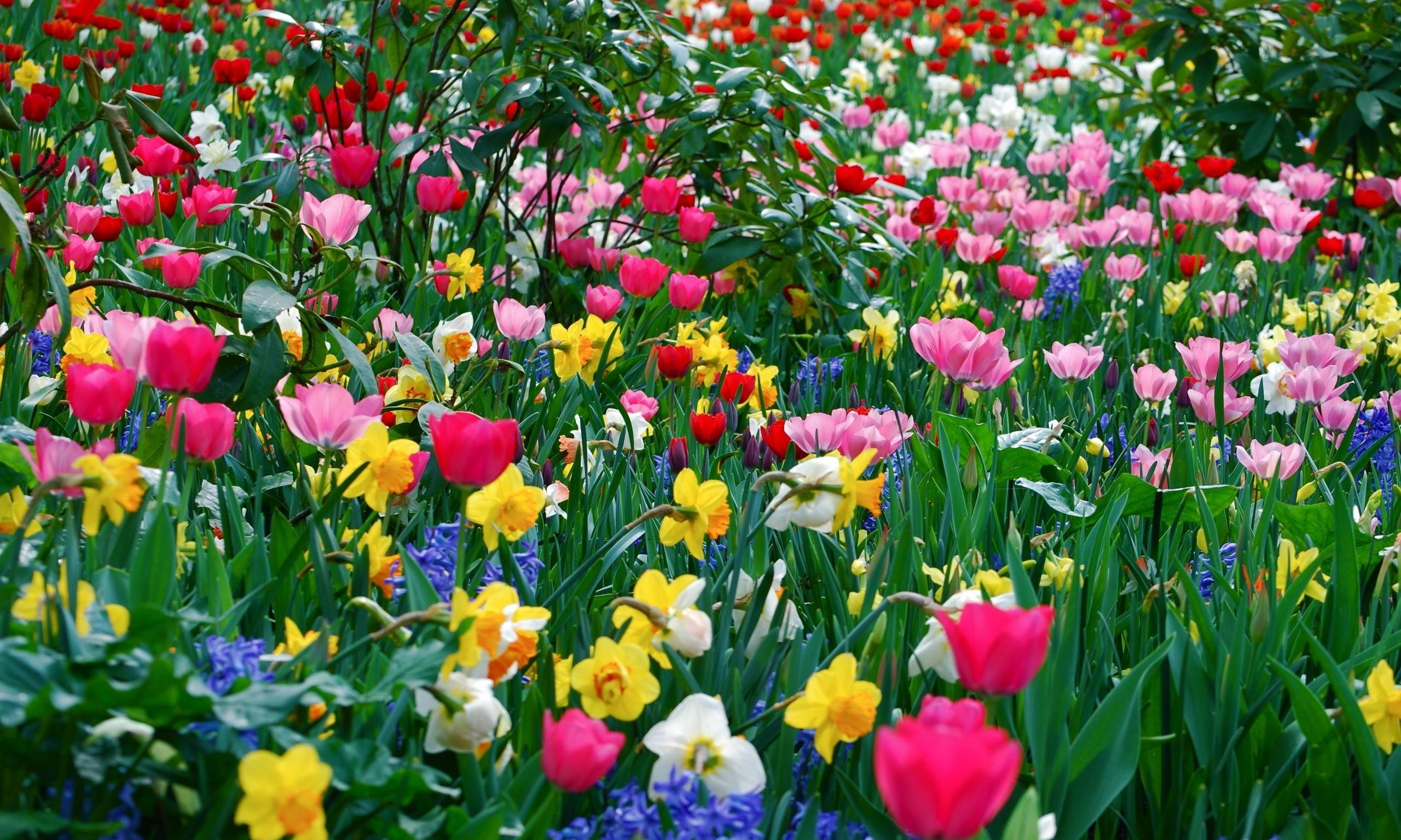 spring flowers backgrounds #4