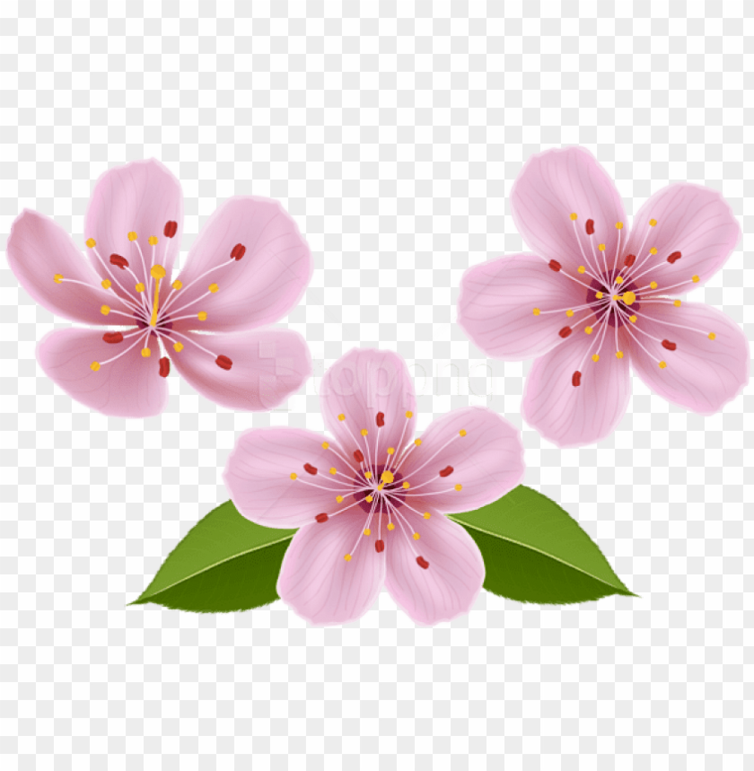 free png download spring flowers png images background.