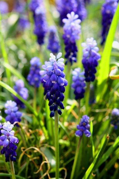 Flower images spring flowers free stock photos download (13,424.