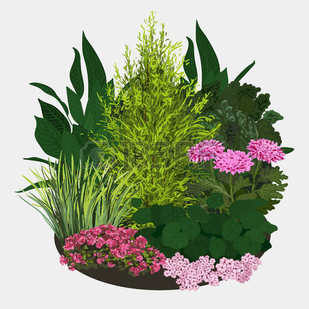 218 Flowering Shrubs Stock Vector Illustration And Royalty Free.