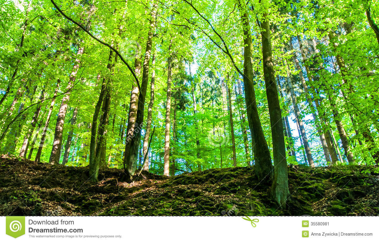 Green, Spring Forest. Stock Image.