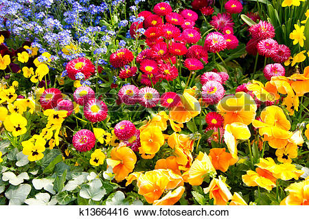 Stock Images of Heralds of spring k13664416.