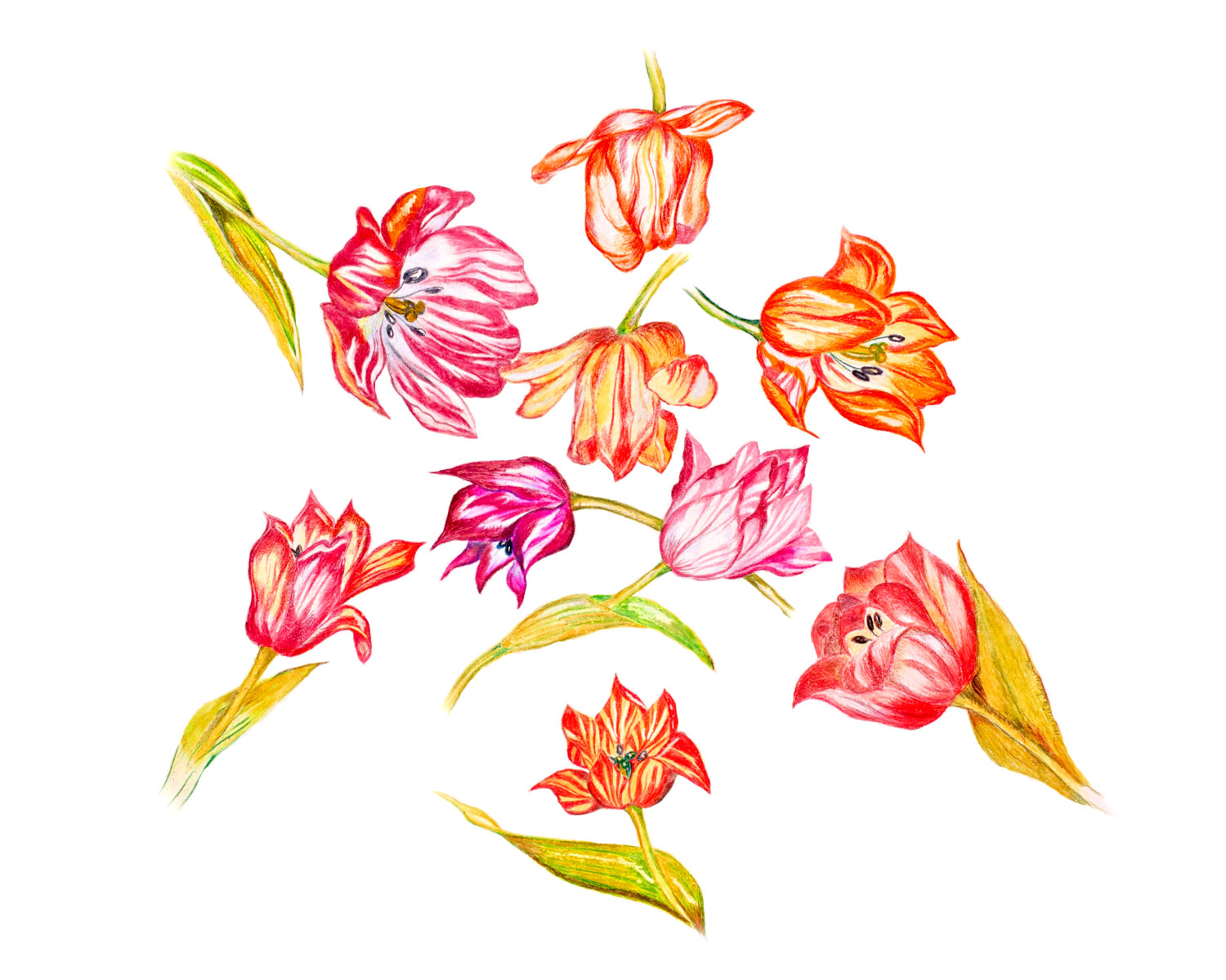 LIMITED EDITION of Strewn Tulips symbolizing True Love and Heralds.