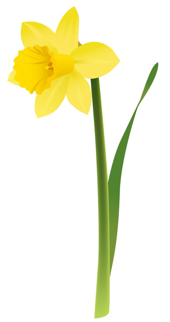 Daffodil Clip Art Free.