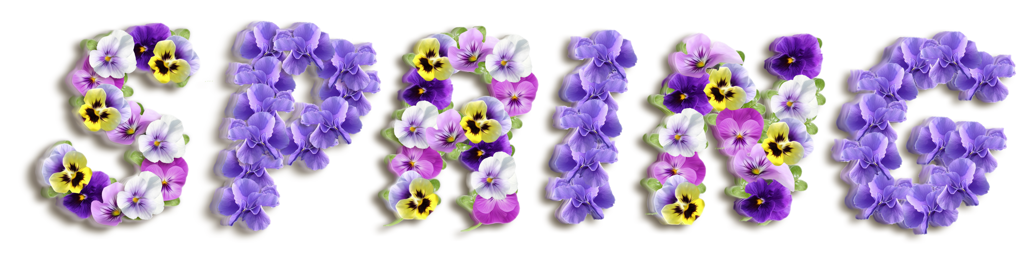Spring Violets PNG Clipart Picture.