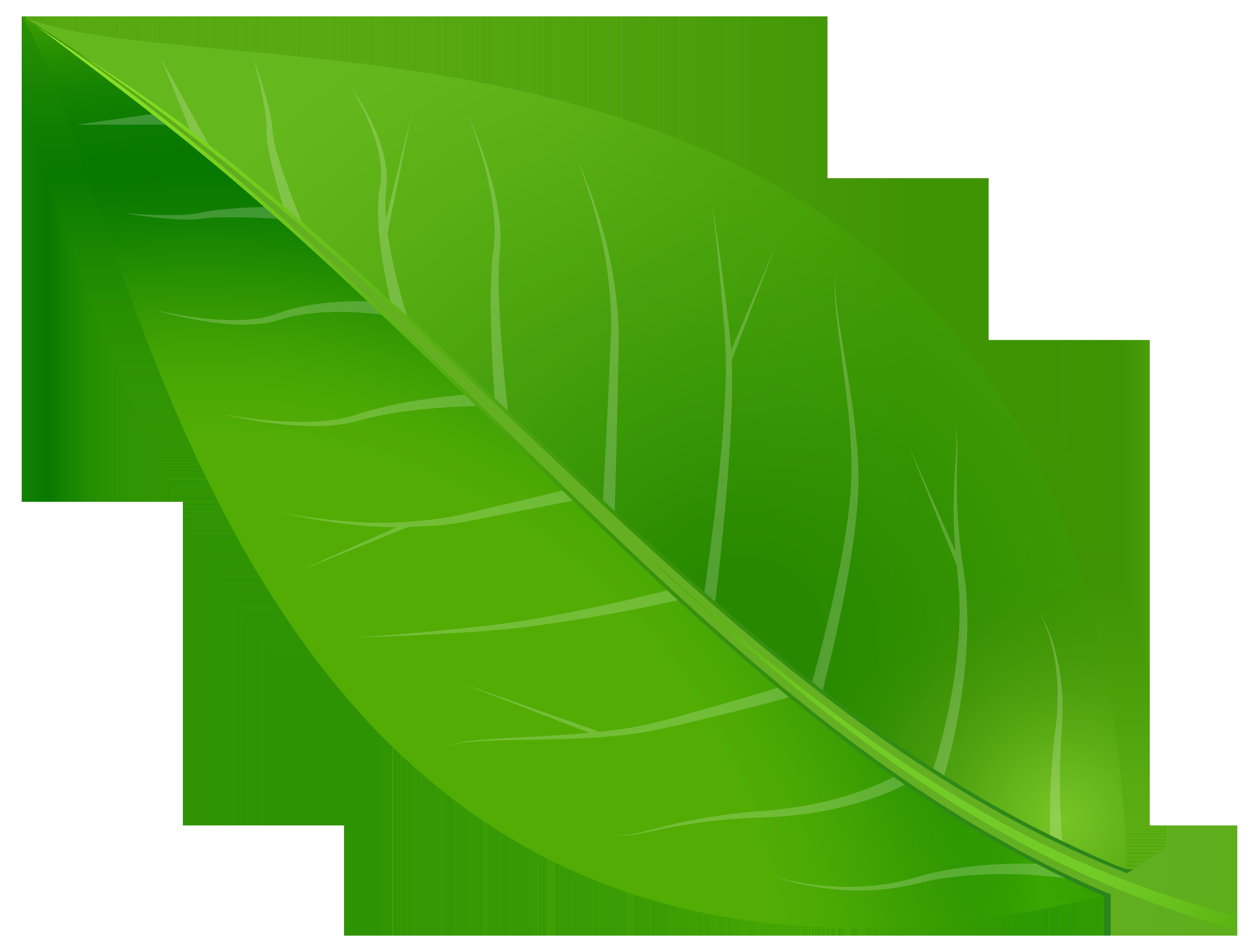 Spring Leaf Transparent PNG Clip Art Image.