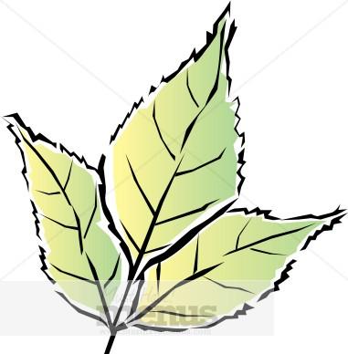 Spring Leaf Clipart.