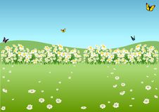 Spring Meadow Stock Photography.