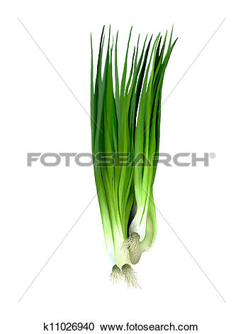 Stock Illustrations of Fresh Spring Onions or Fresh Leeks.