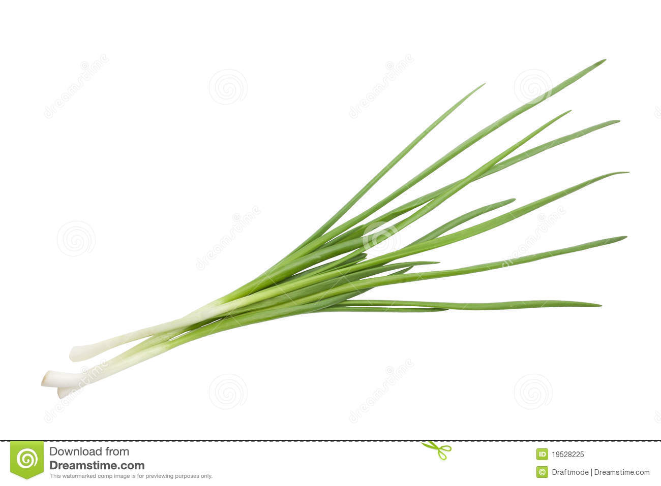 Spring Onion Royalty Free Stock Photo.