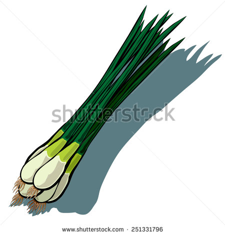 Spring Onion Stock Vectors, Images & Vector Art.