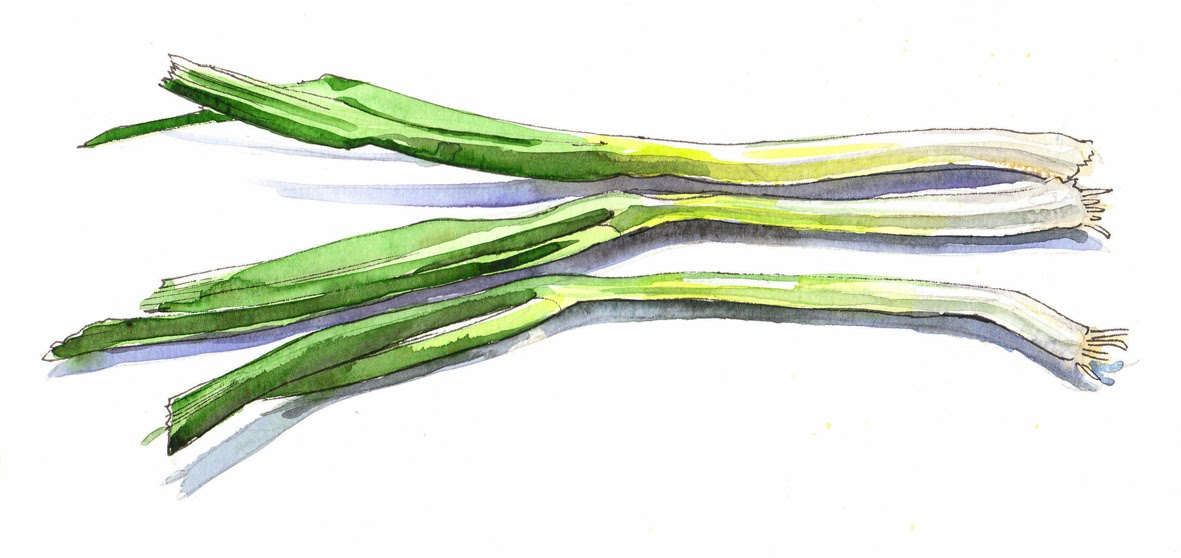 Spring onion clipart.