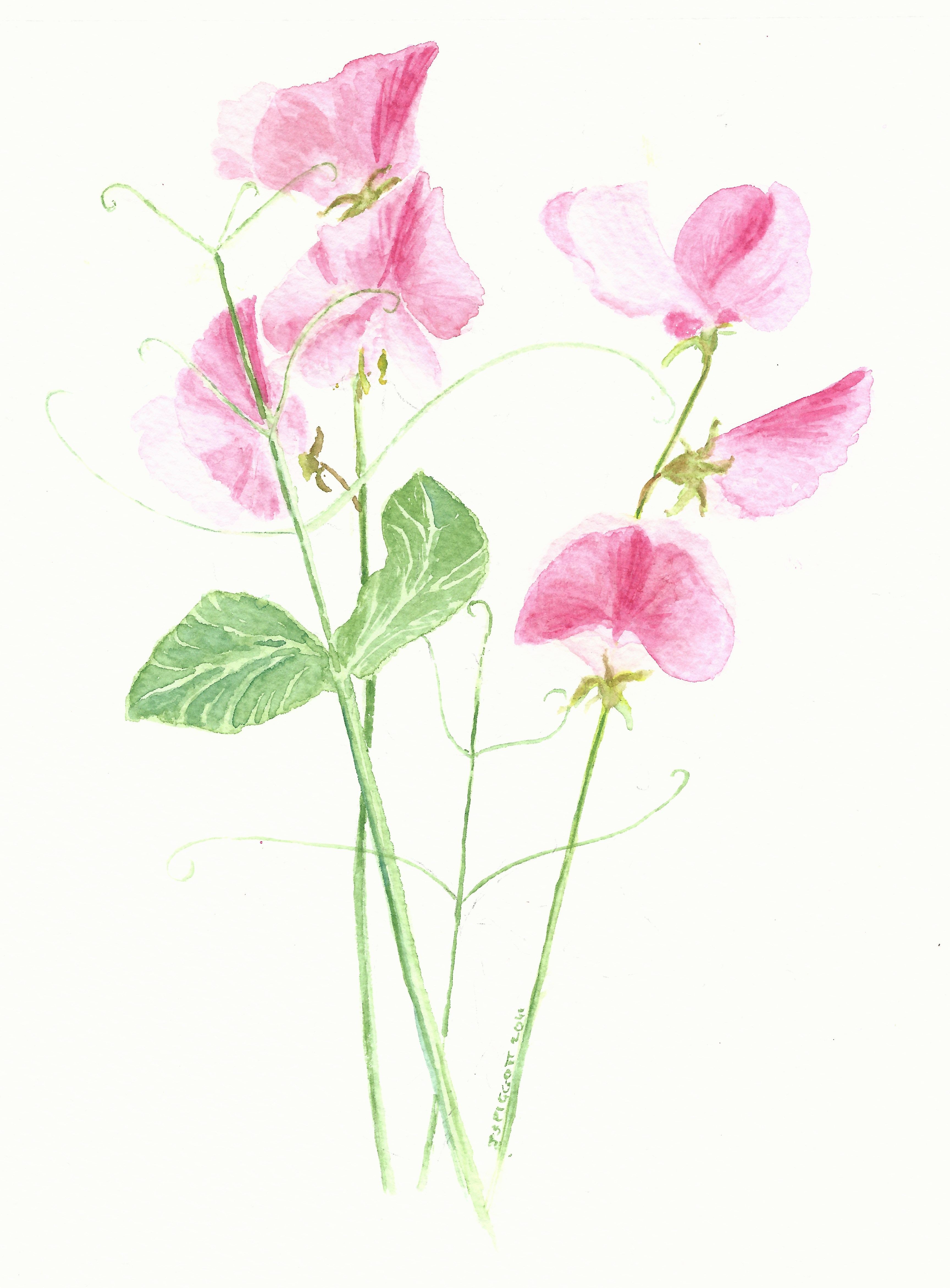Spring Pea Clipart Clipground