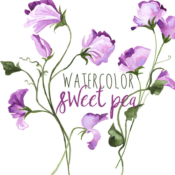 Watercolor Sweet Pea Spring Floral Border by DigitalPressCreation.