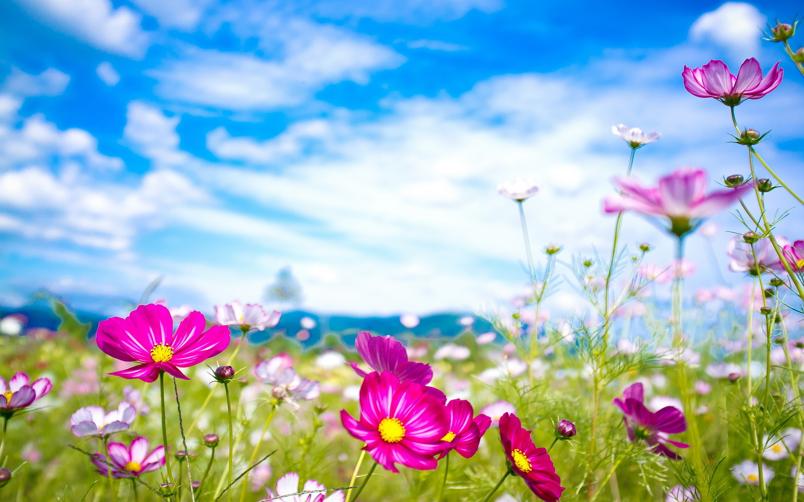 Free Picnic Wallpapers, Best Free Picnic Wallpapers in High.